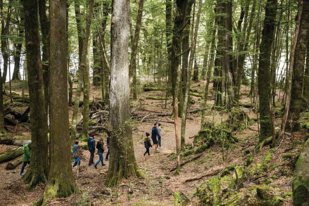 Dart River jey boat adventures include a hike through the woods like this group of hikers