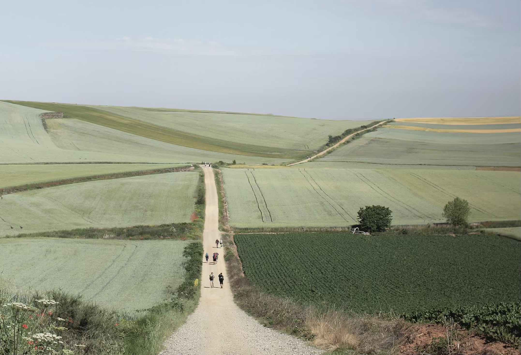 People walking along a track through the country on the Camino de Santiago
